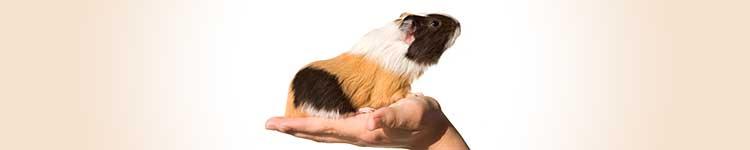 Preparaty dla innych zwierząt