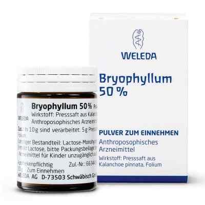 Weleda Bryophyllum 50% proszek doustny