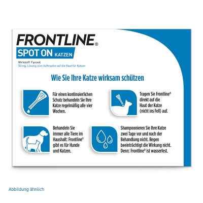 Frontline Spot preparat dla kotów, pipetka  zamów na apo-discounter.pl