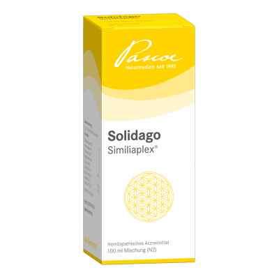 Solidago Similiaplex Tropfen