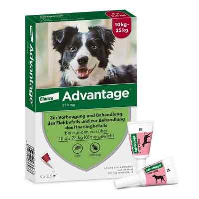 Advantage 250 f. Hunde Einzeldosispip.