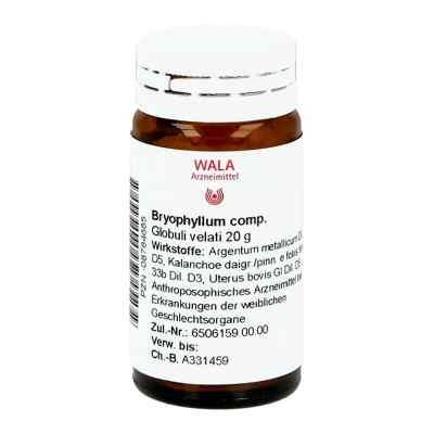 Bryophyllum Comp. granulki  zamów na apo-discounter.pl